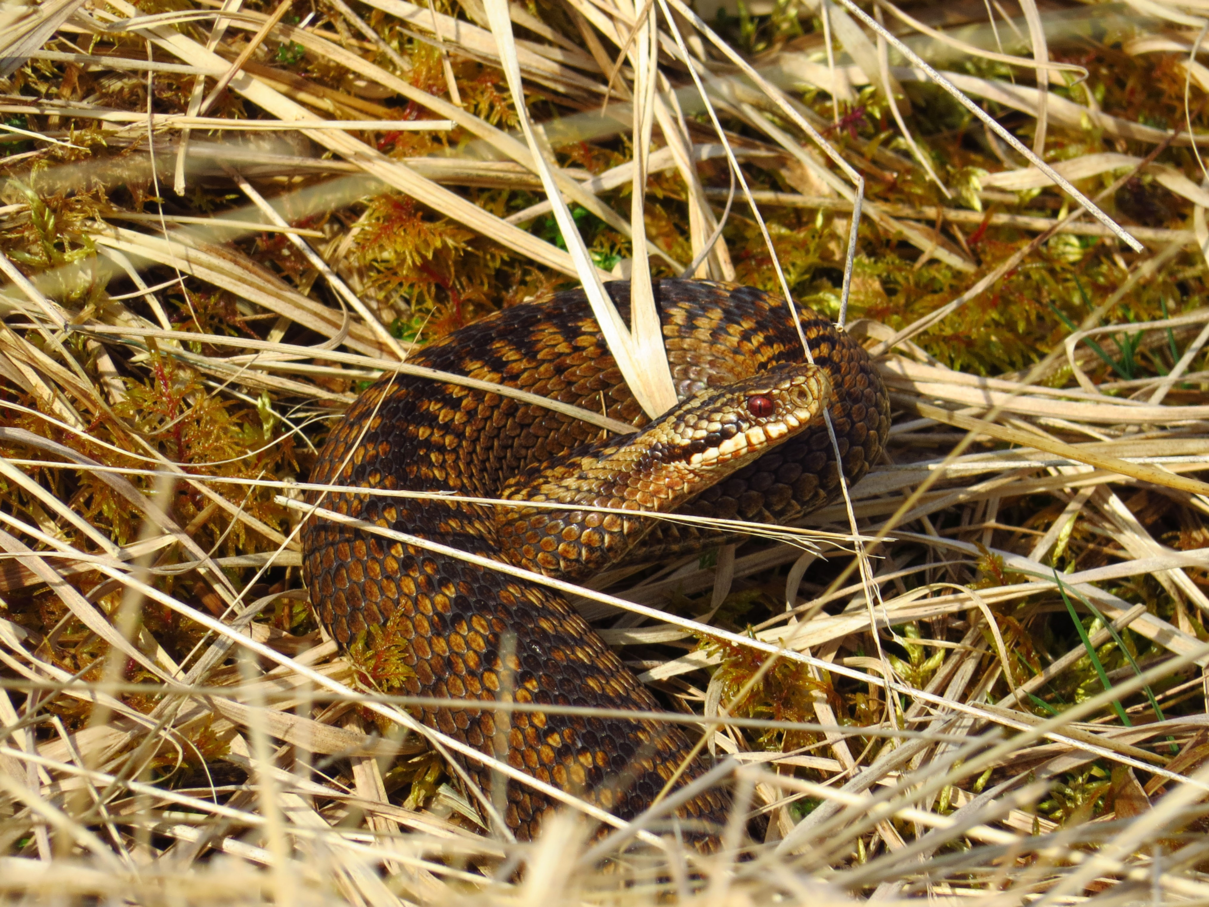 15th May - Make The Adder Count Survey