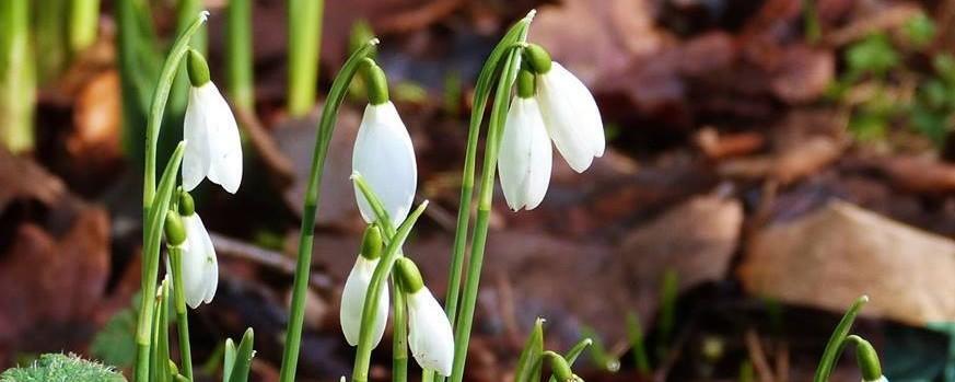 19th March - Wildlife Garden Spring Clean