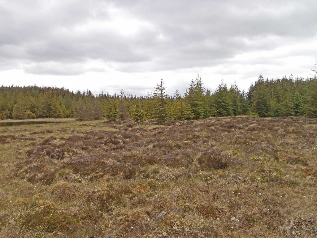 Conifer encroachment on to peat bog © CEI