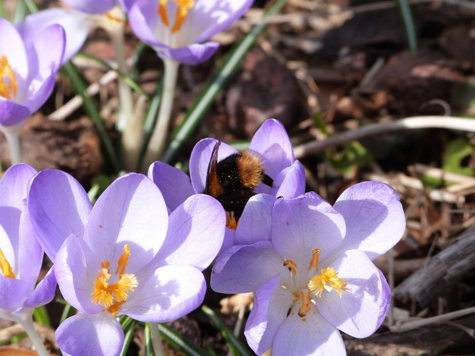 28th April - Wildlife Garden and Path Network Celebration event