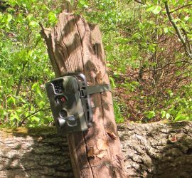 5th April - Wildlife Tracking and Field Craft Workshop