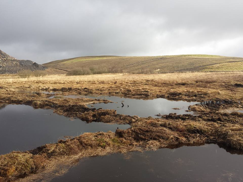 Shallow pools created through ditch blocking work at Low Moss, near Lugar