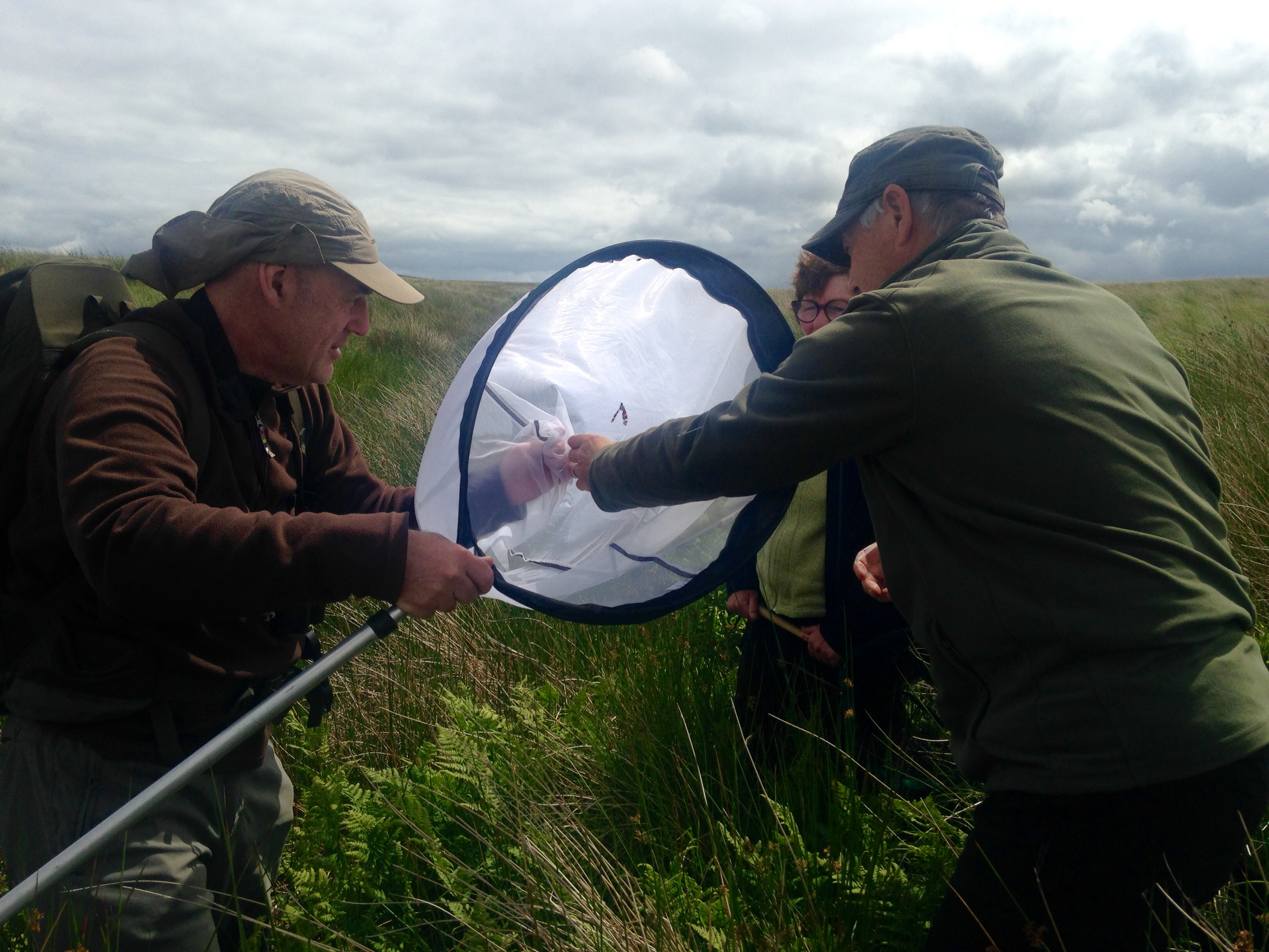 CEI volunteers net a Red Admiral during the hunt for the Large Heath