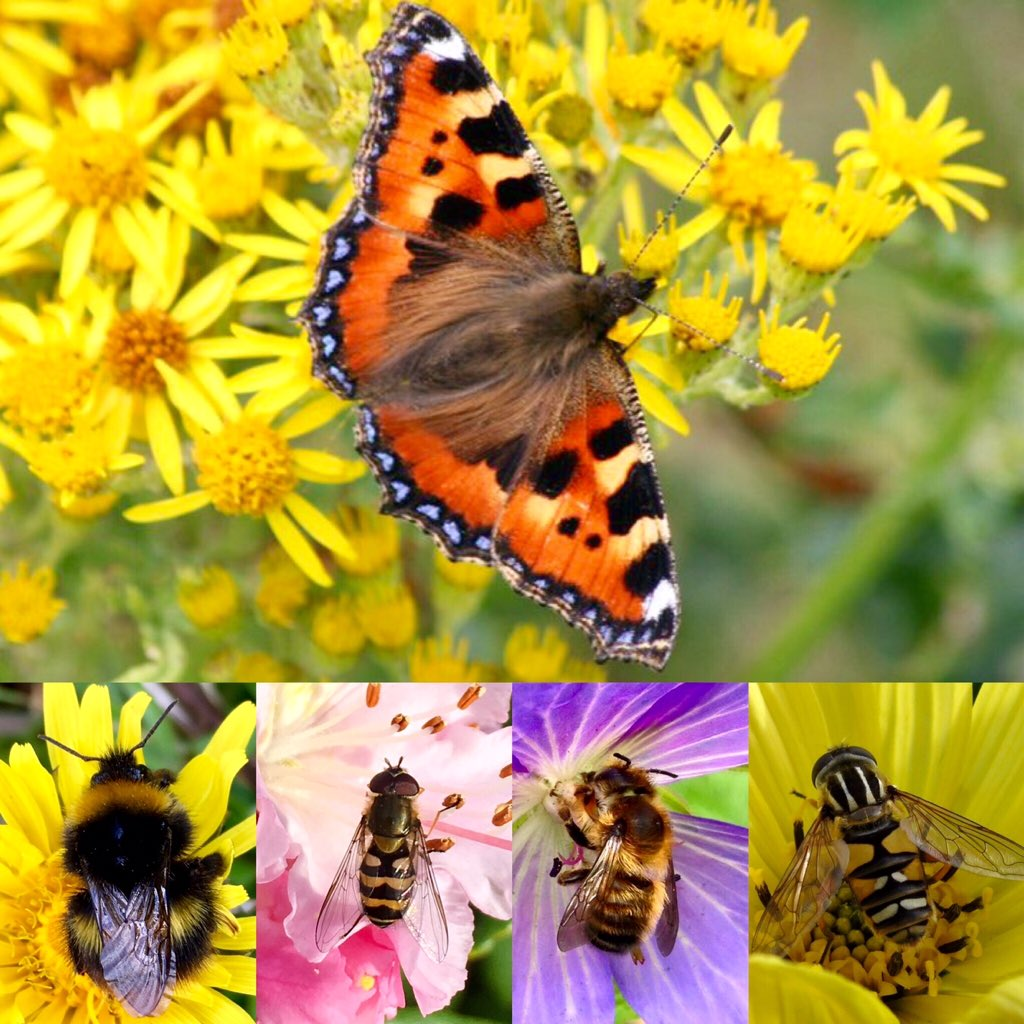 Ayrshire Pollinators (c) Scott Shanks
